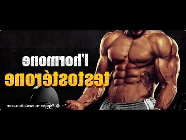 Booster de testosterone musculation : promo - inedit - comparateur