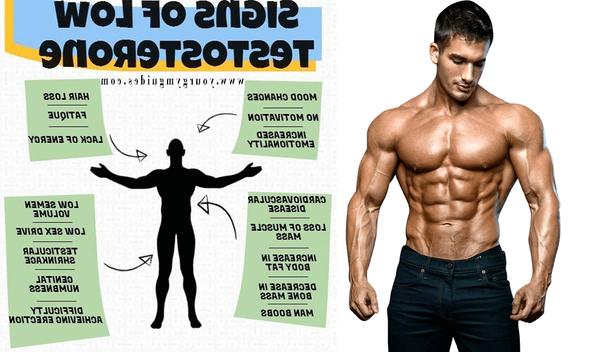 Testosterone : promotions - solde - conseil